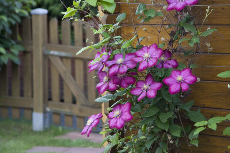 Beauty In Nature Blooming Close-up Day Flower Fragility Freshness Growth Nature No People Outdoors Plant