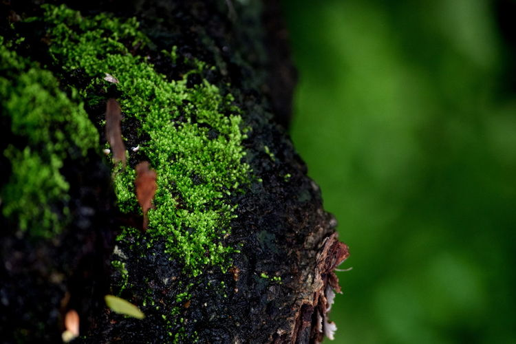 Beauty In Nature Nature Day Green Color Outdoors Leaf Close-up Freshness Branch