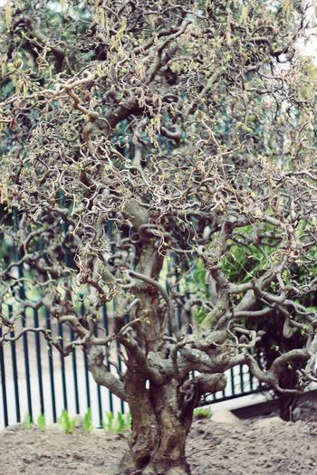 Древо Tree