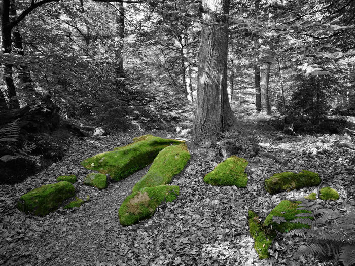 Alsace Beauty In Nature Blach&white Calm Colorful Filter Forest Fun Huawai P9 Huaweiphotography Leaf Nature Nature_collection Non-urban Scene Peaceful Photooftheday Rock