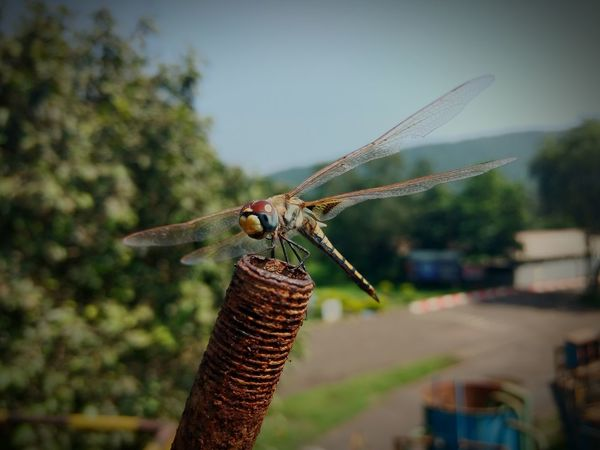 Animal Themes Insect One Animal Focus On Foreground Dragonfly Animal Wing Wing Nature Urban Scene Day Sky Basking In The Sunlight Close-up
