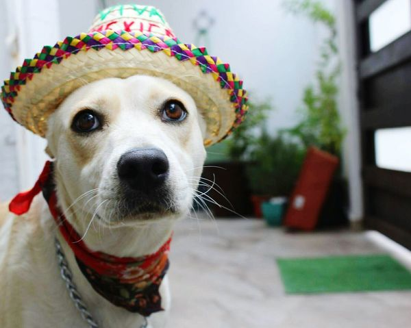 Pet Portraits Dog Pets Animal One Animal Portrait Humor Looking At Camera Cute Pet Clothing Water Domestic Animals No People Outdoors Day Animal Themes Close-up The Week On EyeEem Mexico Mexican Style Independence Day Mexico Viva Mexico Pray For México WeAreMexico Helping Others