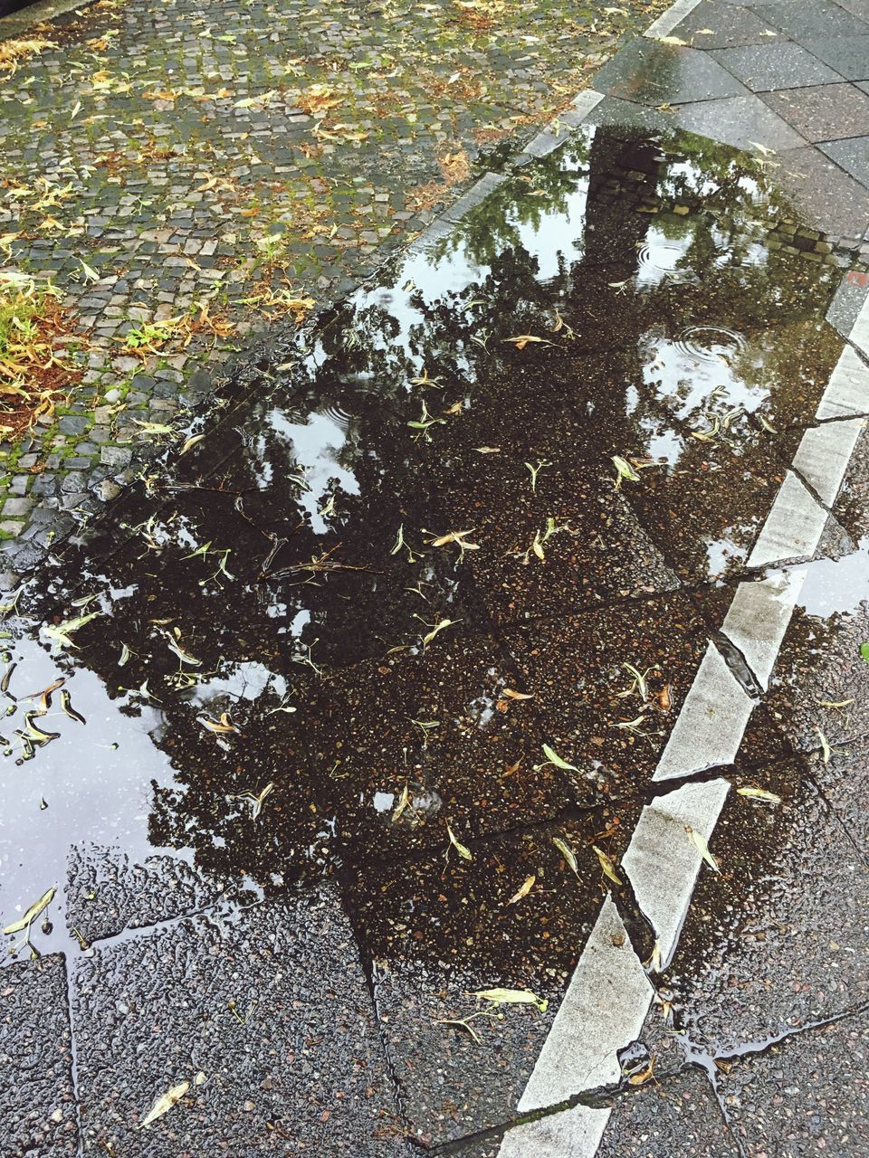leaf, autumn, high angle view, outdoors, day, street, no people, change, puddle, reflection, road, nature, water, oil spill, close-up