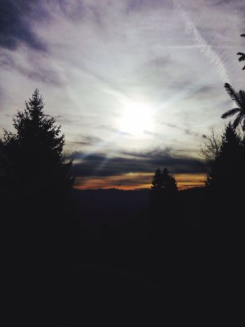Sun Forest Nature Tranquility Sky first eyeem photo