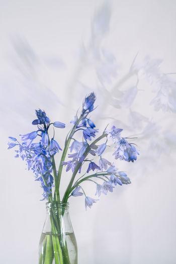 Close-up of flower vase against blue sky