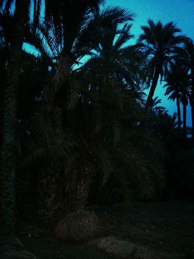 Elche MyHOUSE rodeado de palmeras!