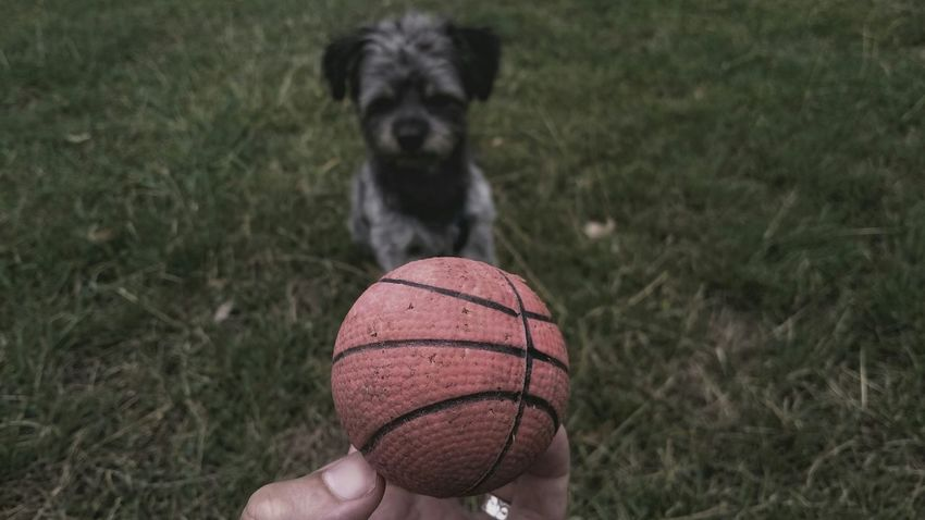 Dog Walking Nature On Your Doorstep Capturing Freedom Faces Of Summer What My Hands Touchseries The Week On EyeEm Duesseldorf Rheinufer Doggy Love Playing Basketball Summer Dogs