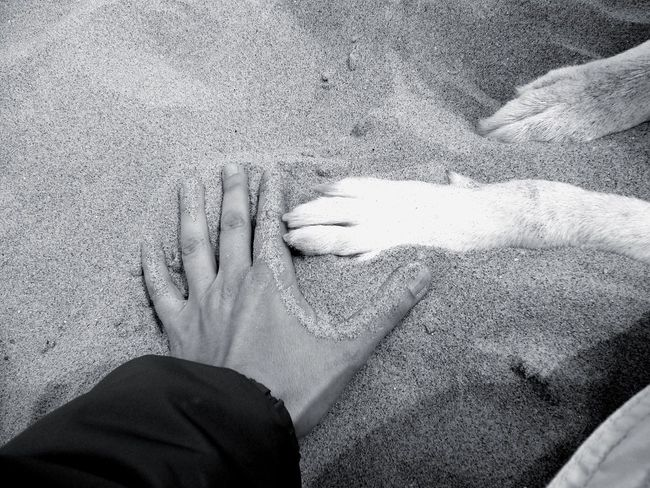 Wishy Bestfriend Dog Hand Paws I Love My Dog Life Is A Beach Monochrome A Dogs Life Sand The KIOMI Collection Two Is Better Than One The Magic Mission Pet Portraits Black And White Friday