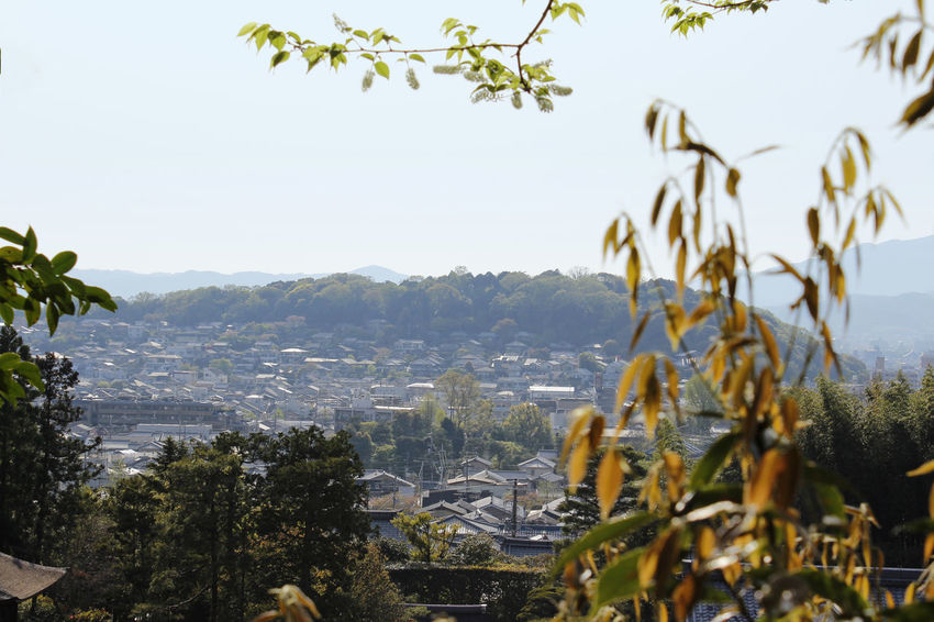 View of Kyoto from the Ginkakuji Temple with the leaves as blur foreground Architecture Beauty In Nature City Clear Sky Day Foreground Growth Kyoto, Japan Landscape Leaves Mountains Nature Outdoors Panoromic Scenics Sky Sunlight And Shadow Sunset Tree