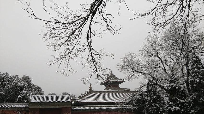 White memory Snow Chinese Culture Silent Moment My Love Missing You Building Exterior Sky Tree Architecture No People Roof Traditional Building Outdoors Tiled Roof  Beauty In Nature Low Angle View Built Structure Day Bare Tree Nature