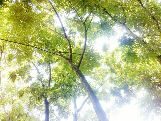 Nature Trees Tree Branches Treelovers Tree_captures Goodday Trees And Nature Green Leaves Green Nature Likethis Itsabeautifulworld Green Plant Branches And Leaves Sorrounded By Trees