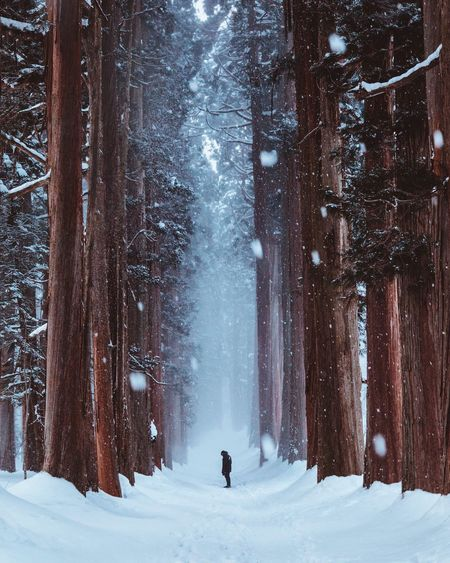 @itchban / itchban.com Beauty In Nature Cold Temperature Extreme Weather Forest Full Length Land Leisure Activity Lifestyles Nature One Person Outdoors Real People Snow Snowing Tree Unrecognizable Person Warm Clothing Winter The Traveler - 2018 EyeEm Awards
