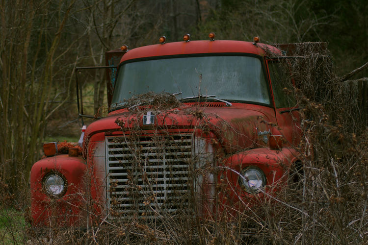 Abandoned red truck amidst bare trees on field