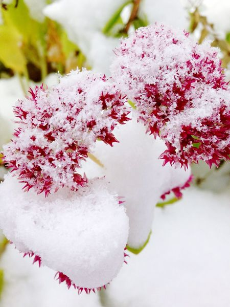 А в средней полосе России начался -1 месяц зимы 😊❄️🌨 Beauty In Nature Flower Plant Flower In Snow First Snow