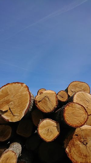 Stack Heap Sky Woodpile Tree Ring Log Wood Axe Firewood