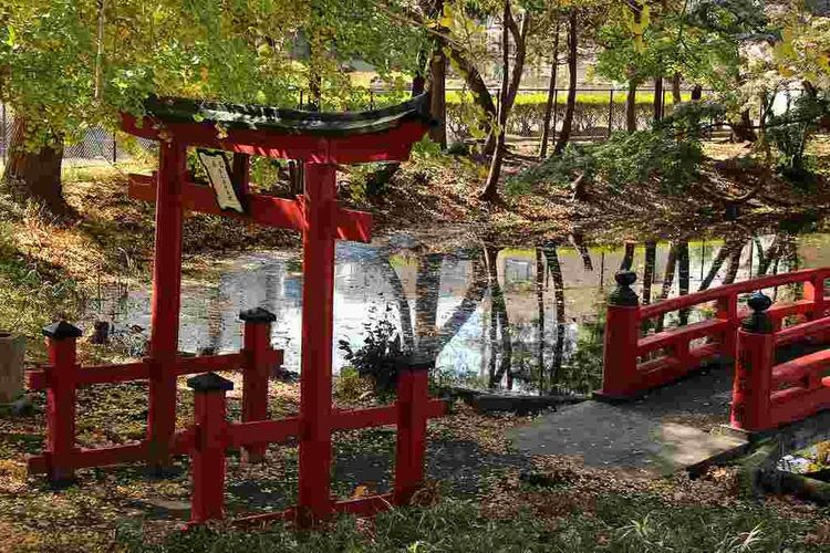 Autumn Japan Pond Gate Outdoors Red Tree