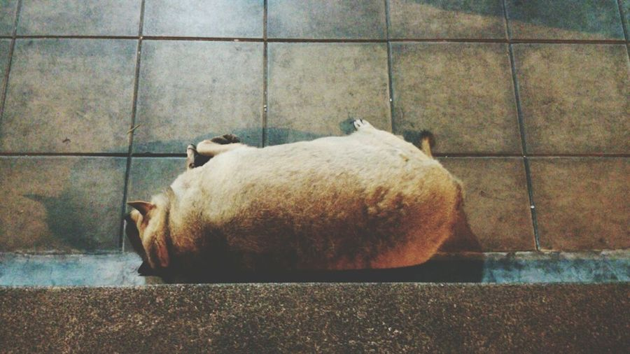 View of a dog sleeping on floor