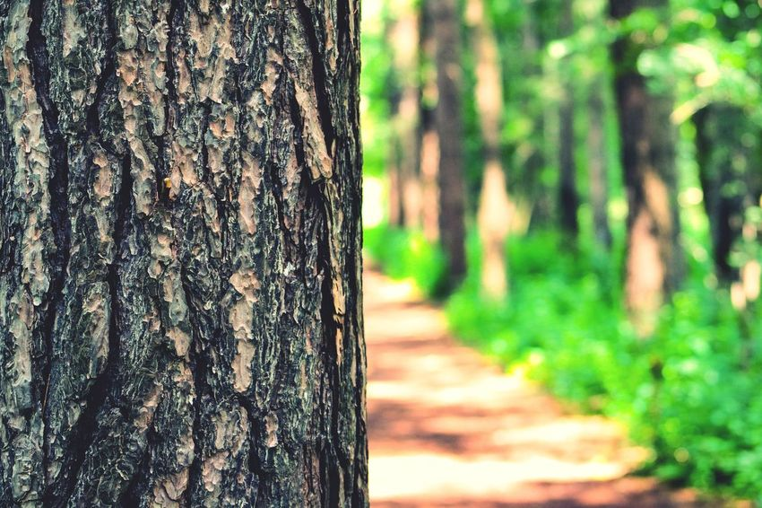 Tree point of view Tree Trunk Tree Nature Forest Day Focus On Foreground Outdoors Textured  Wood - Material Growth Marking No People Tranquility Beauty In Nature Close-up