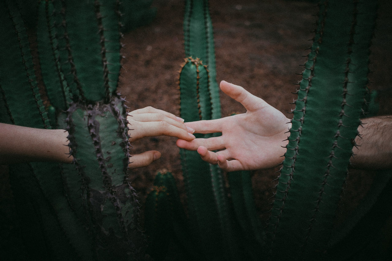 Bonding,  Cactus,  Close-Up,  Cropped,  Day