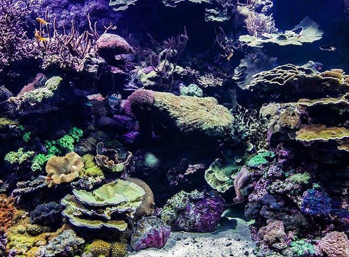 Oceanográfico de Valencia Espectaculares los fondos marinos tropicales Valenciaenamora València Oceanografic Oceanografico Corales Coral Peces Payaso Acuario Tropical Fondosmarinos