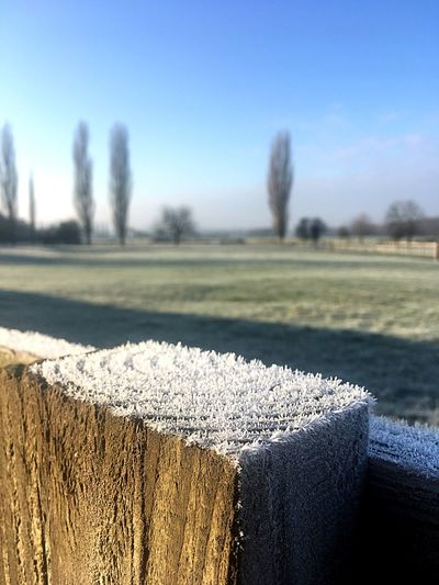 Cold and frosty