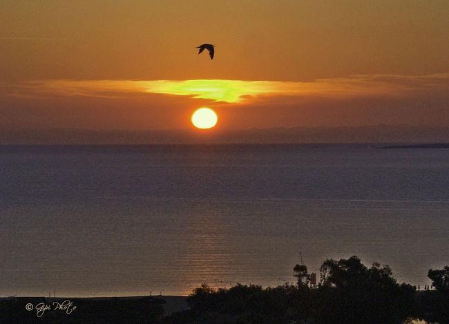 Sunset Flying Bird Sun Arzachena Tanca Manna
