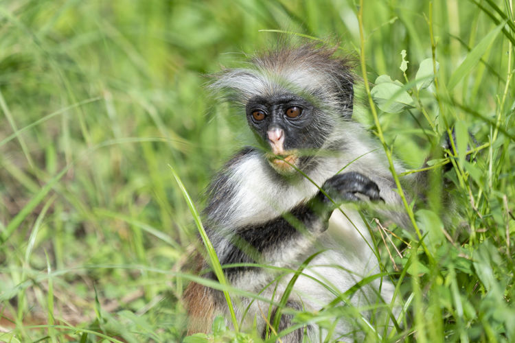 Portrait of monkey sitting on grass
