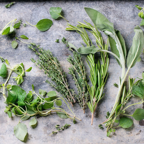 Close-up of herbs