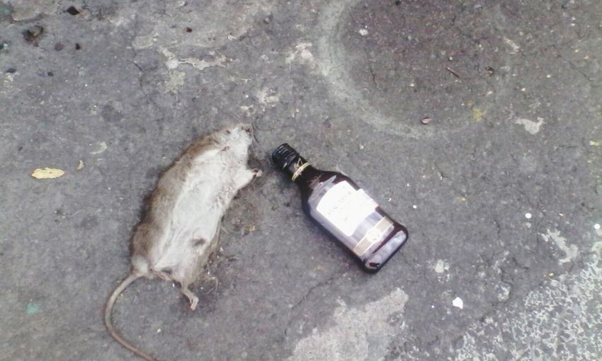 Just a drink please Rat Drink Bottle Funny Totaldrunk