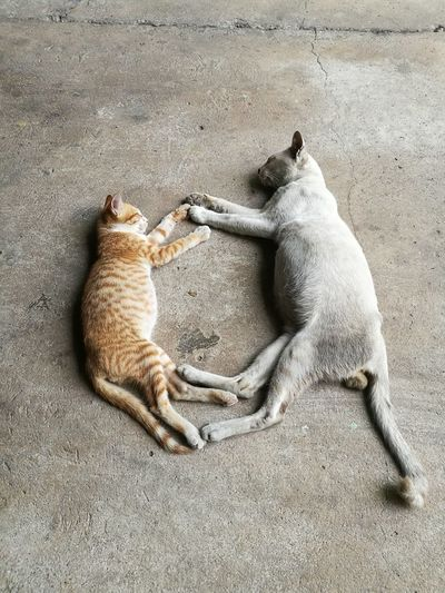 High angle view two cats touching paws