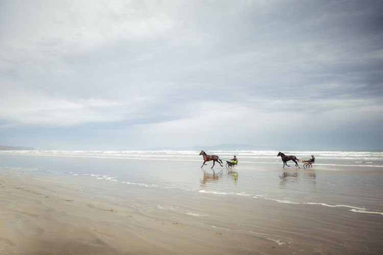 People riding horse cart at beach against sky