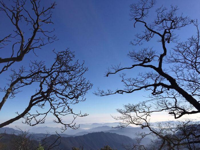 冬意 Nature Tree
