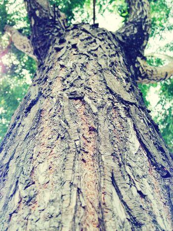 Tree Oldtree