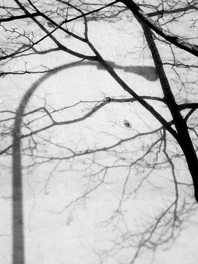 Crossed Shadow Street Light & Tree Black & White Shadow Interaction Mixed Shadow