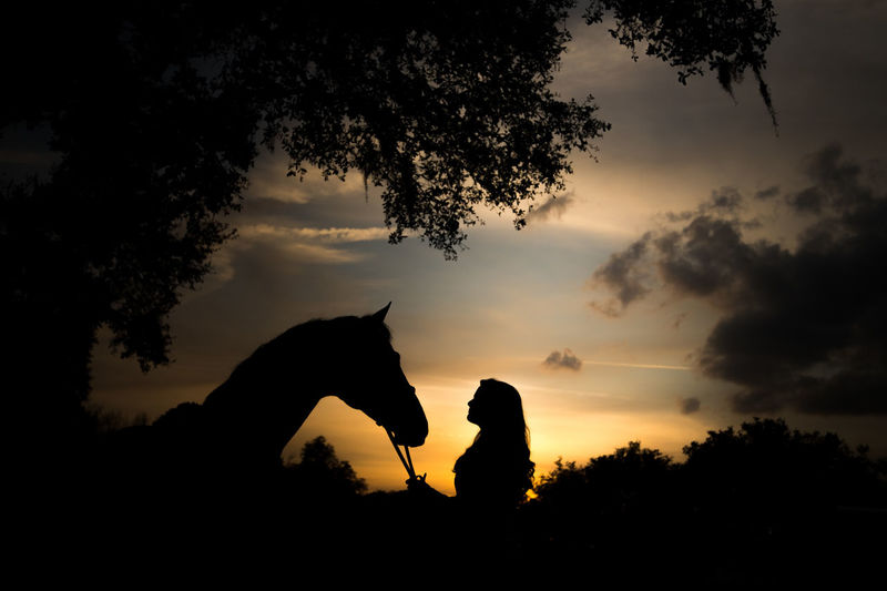 Silhouette person with horse in background at sunset