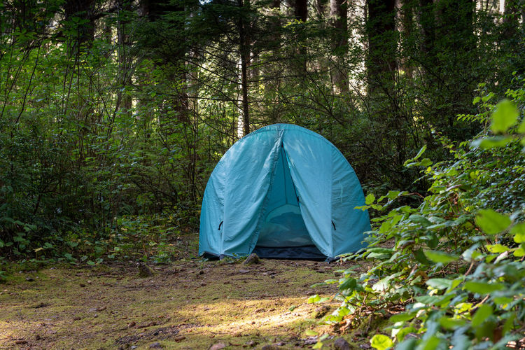 View of tent in forest