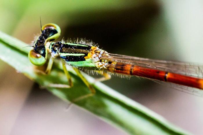 Dragonfly, Insect Close-up Animal Wildlife Green Color Nature Animals In The Wild