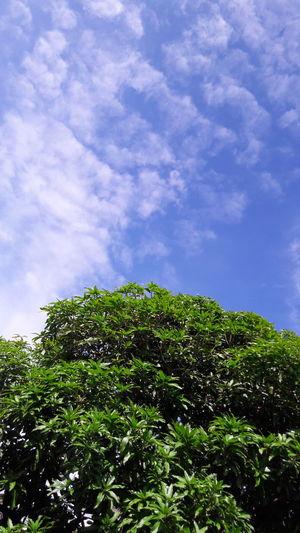 Sky, tree, outside, no person