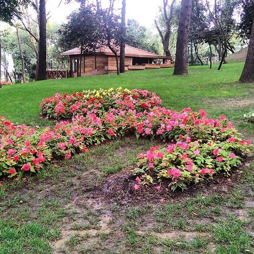 Buralari ne zaman talan edip avm yapacaklar acaba? Istanbul Emirgan Park Koru color nature manzara doga travel turkiye turkey flower cicek
