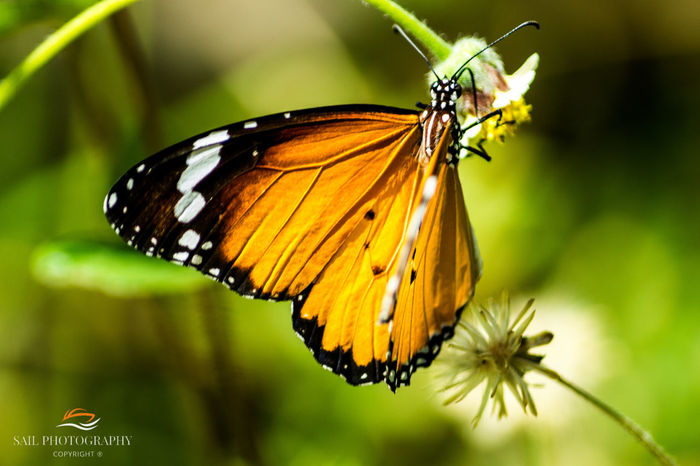Sometime its all about colours of life, i love my memories .... its all about photography Butterfly - Insect Eyemphotography