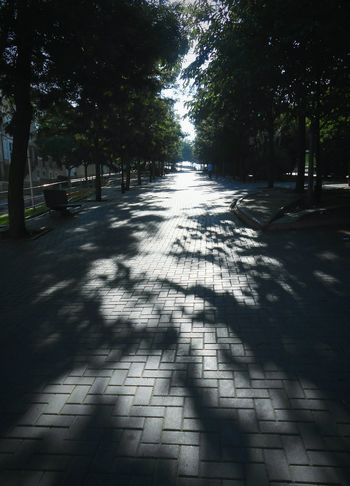 ... Shadows ... Tree Shadow Sunlight Outdoors Sunbeam Day Tranquility City Alley Cartagena,Murcia Cartagena, Spain Trees Park Pavement Cityscape Shady Trees Walking Human Planet Exploring Walking Around The City  España