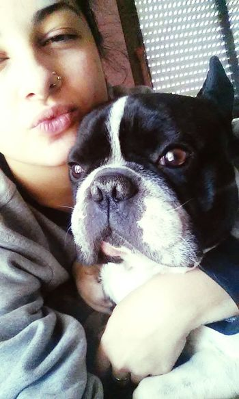 Love Dog French Bulldog Me Goodmorning ✌