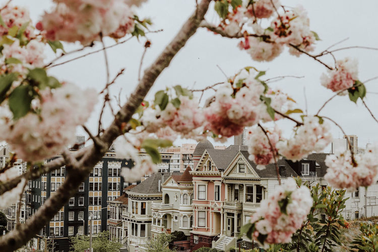 Low angle view of cherry blossom tree by building