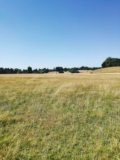 Blue Sky Green Fields