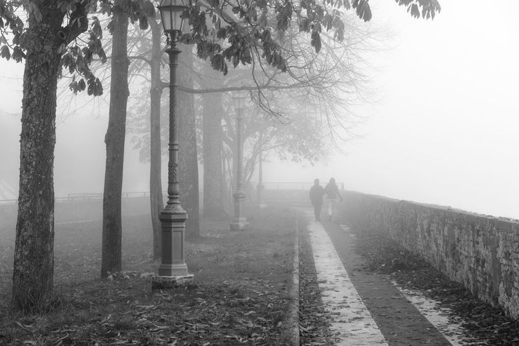 Autumn Beauty In Nature Couple Day Fog Foggy Loneliness Men Misty Nature One Person Only Men Outdoors People Real People Road Sky The Way Forward Tree Tree Trunk