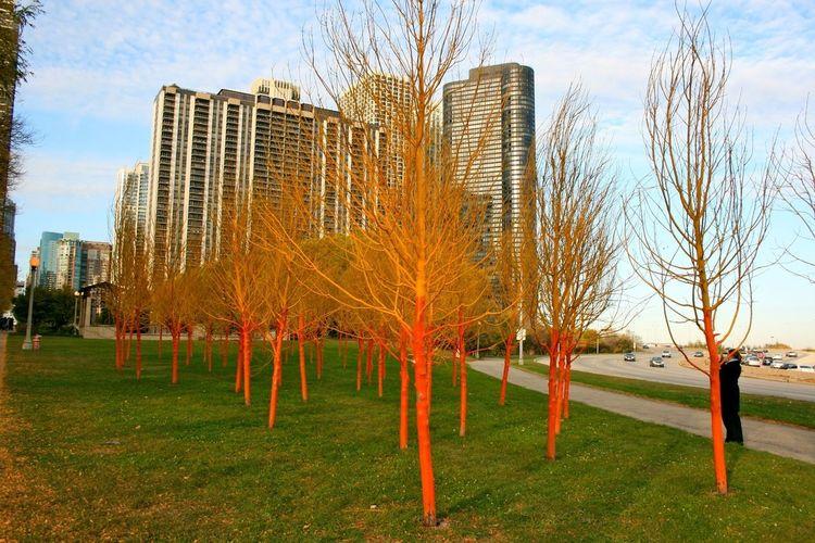 Chicago Nofilter Architecture Treetastic