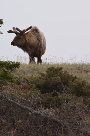 Alberta Animals In The Wild Canada Close-up Jaspernationalpark Grazing Wildlife & Nature Nature_collection Wildlife_shots Rockies