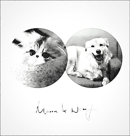 Maoou & Wroof    An exchange diary between Caj the cat & BoyBoy the dog    Facebook page: www.facebook.com/maoou.wroof Open Edit Blackandwhite Cat Dog Hon'ne Magazine