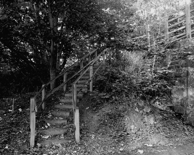 Black & White Stairs Trees Bridge Light And Shadow Tayport
