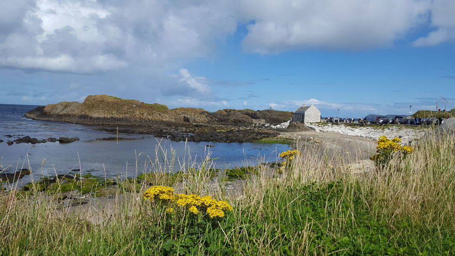 Lanscape Game Of Thrones Ballintoy Ballintoy Harbour Nothern Ireland  Ulster Beauty Beauty In Nature Flower Water Yellow Uncultivated Sky Grass Landscape Cloud - Sky Flowering Plant Wildflower My Best Photo